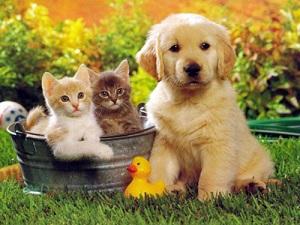 hayvanlarla-ilgili-bilmeceler